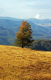 Isolated tree on a hill during a sunny autumn day Stock Images