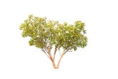 Isolated tree stock photos