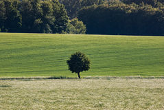 Isolated Tree in the Land Stock Image