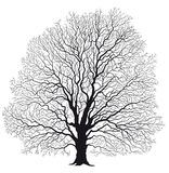 Isolated tree without leaves Stock Images