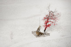 Isolated tree in the middle of winter Stock Photography