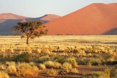 Isolated Tree in Namib Naukluft National Park, Namibia Royalty Free Stock Image