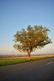 Isolated tree Stock Photography
