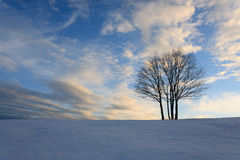 Isolated tree over blue sky. Winter panorama Stock Photo