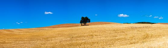 Isolated tree panorama Stock Photo