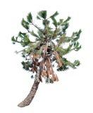 Isolated Tree Royalty Free Stock Photos