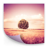 Isolated tree in a tuscany wheatfield Italy - concept image Royalty Free Stock Images