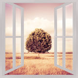 Isolated tree in a tuscany wheatfield view from the window - con Stock Photos