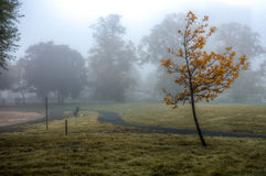 Isolated tree under heavy dense fog at a park Stock Photos