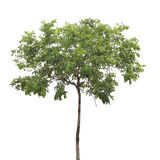 Isolated tree Stock Photos
