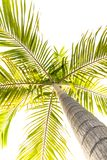 Isolated tree royalty free stock image