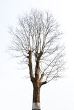 Isolated tree in the winter Royalty Free Stock Photos
