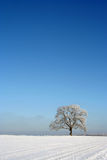 Isolated tree in winter Portrait. An isolated in winter portrait mode royalty free stock image