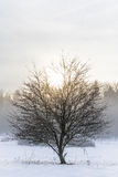 Isolated tree and winter Royalty Free Stock Photos