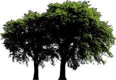 Isolated trees Stock Photo