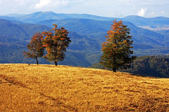 Isolated trees on a hill during a sunny autumn day Royalty Free Stock Images
