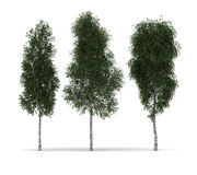 Isolated Trees. (isolated on white stock illustration