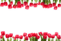 Isolated Tulip Frame. Arrangement, on a white background Stock Images