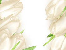 Isolated tulip frame. EPS 10 Stock Photos