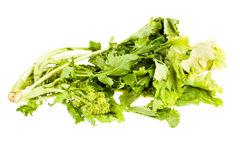 Isolated Turnip greens Royalty Free Stock Photo