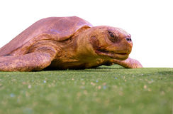 Isolated turtle Royalty Free Stock Photo