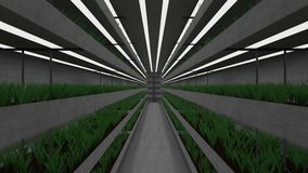 Isolated underground greenhouse. Camera moving vertical and showing multiple tiers of green plants growing in a hothouse bunker, hydroponics future concept stock video