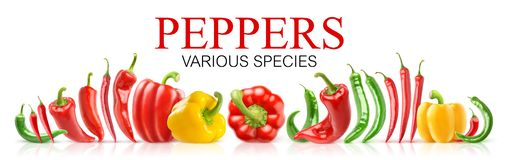 Isolated various species of peppers royalty free stock photography