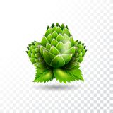 Isolated vector hop illustration on transparent background. Isolated vector hop illustration on transparent background Royalty Free Stock Images