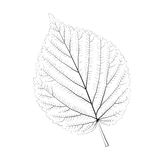 Isolated vector monochrome birch leaf. Royalty Free Stock Photography