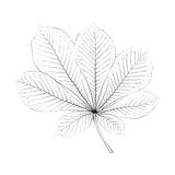 Isolated vector monochrome chestnut leaf Stock Photos