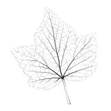 Isolated vector monochrome currant leaf Royalty Free Stock Photo