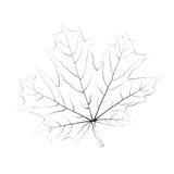 Isolated vector monochrome maple leaf Stock Images
