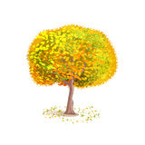 Isolated vector tree. Isolated autumn tree on a white background. Deciduous tree with yellow leaves. Fallen leaves around the tree. Cartoon style. Vector Stock Photography