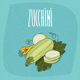 Isolated vegetable fruits courgette or zucchini Royalty Free Stock Photos