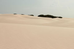 Isolated vegetation between the sand dunes Stock Image