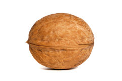 An isolated walnut Royalty Free Stock Image