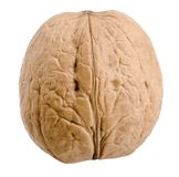 Isolated walnut. On a white background Royalty Free Stock Images