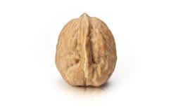 Isolated walnut Royalty Free Stock Photo