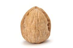 Isolated walnut Stock Photos