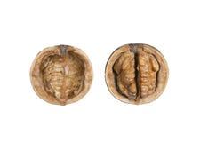 Isolated walnut. On white background Stock Photos