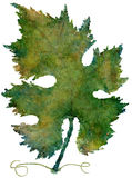 Isolated Watercolor Autumn Vine Leaf (Highres) Royalty Free Stock Photo