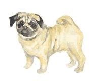 Isolated watercolor dog. Royalty Free Stock Images