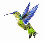 Isolated watercolor hummingbird. Stock Images