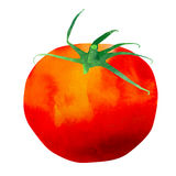 Isolated Watercolor Tomato Illustration Royalty Free Stock Photography