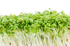 Isolated Watercress Sprouts Stock Photo
