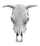 Isolated western-style cow skull Stock Images