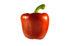 Isolated wet red pepper Stock Images