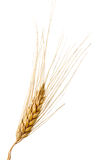 Isolated wheat Stock Images