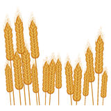 Isolated wheat ear design Stock Photos