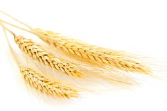 Isolated wheat ears Royalty Free Stock Photos